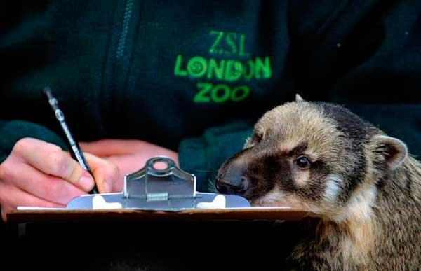 CCTV9英语新闻:伦敦动物园开始一年一度动物大盘点