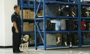 Sniffer dogs base in Beijing holds open day activityThe Beij