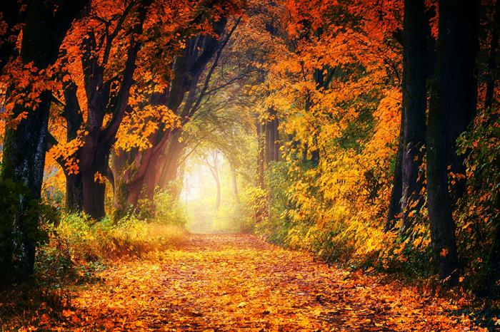 研究发现:气候变暖导致秋天树叶提前变色掉落