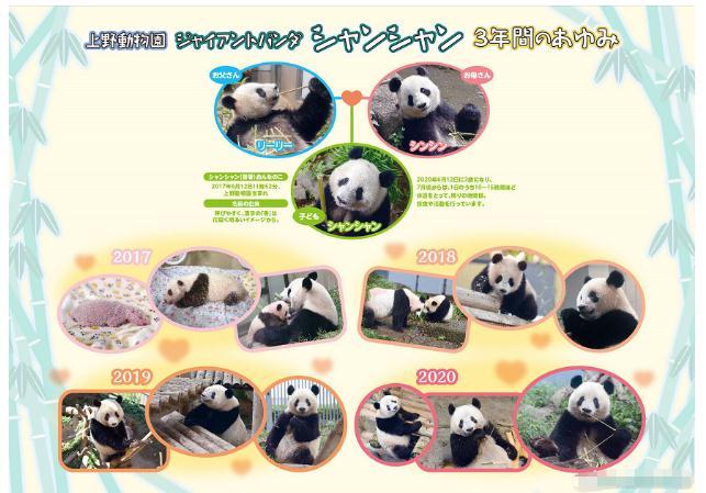 """排面儿!日本送别大熊猫""""香香"""",海报纪念章都安排上了……"""